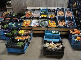 Biologisch plantgoed groenten